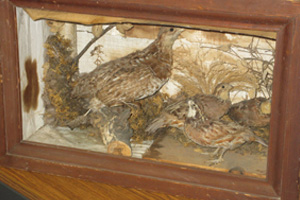 "We lovingly call this donation the ""diorama of death"". There are four real birds in this bad boy!"